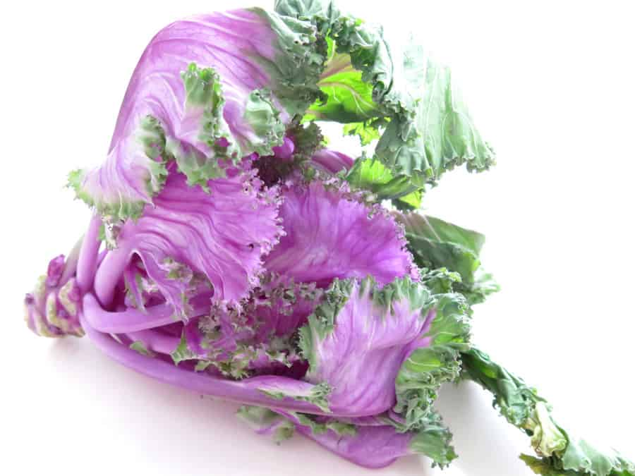 Purple Savoy Cabbage