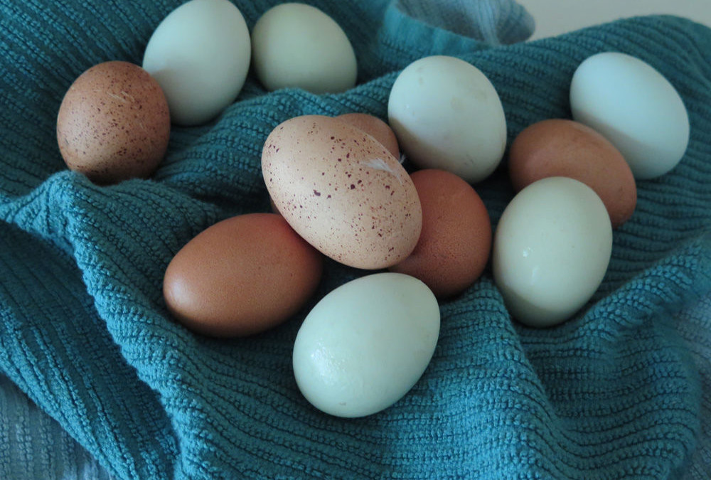 Fresh Eggs From Prairie Birthday Farm