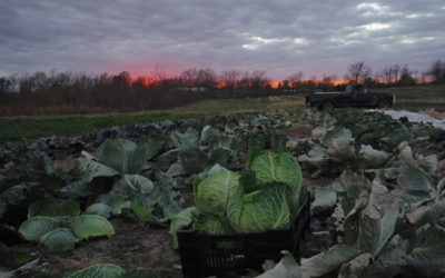 Field Notes: A Visit to Fair Share Farm